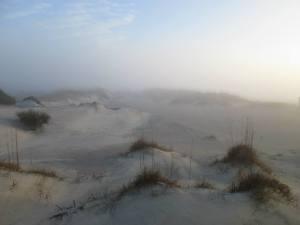 South Georgia Transplant misty dunes