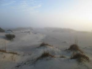 South Georgia Transplant misty dunes