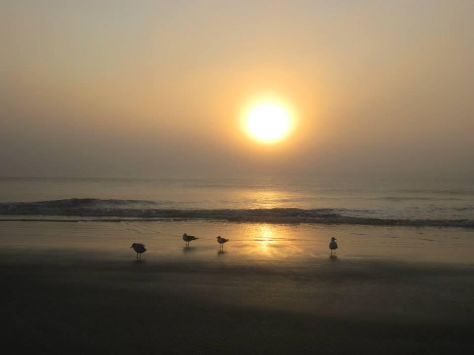 south georgia transplant seagulls and sunrise