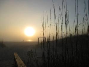 South Georgia Transplant Solitary Sunrise